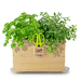 Grow fresh herbs! Saucer and herb snips included!